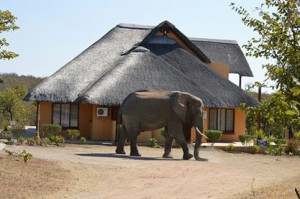 Elephant in front of house nr 10