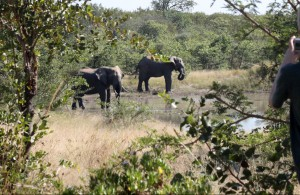 View onto the dam from the house with magnificent view of the elephan roaming free on the Estate